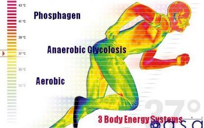 ورزش و تندرستی؛  مقاله سی ام/ منابع تولید انرژی در بدن-بخش دوم
